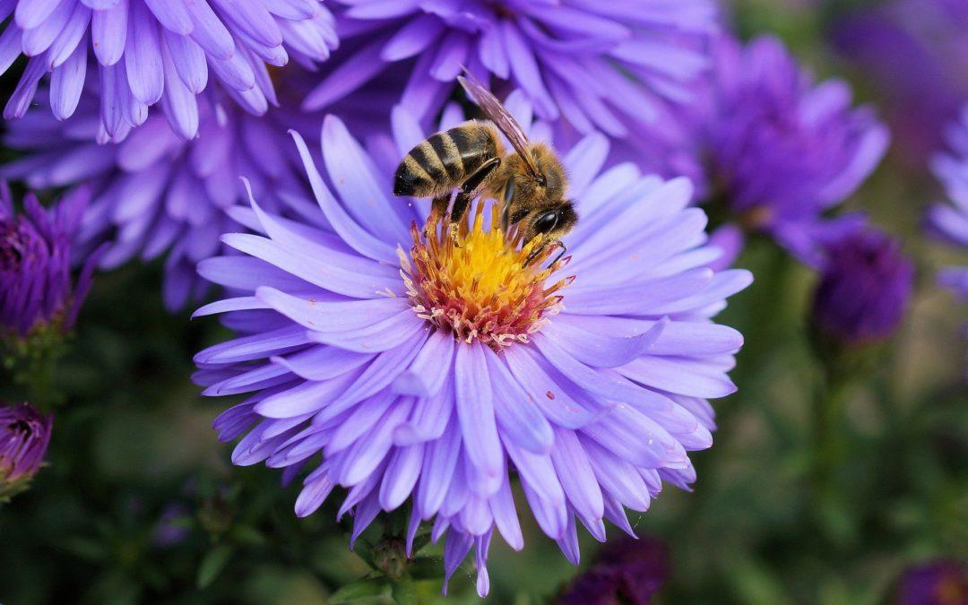 Die Wildbienen sind da!